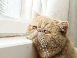 Dünyanın en melankolik kedileri