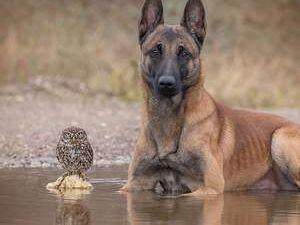 Köpek ve baykuşun inanılmaz dostluğu