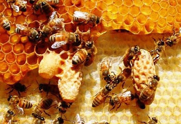 Arı sütünün inanılmaz faydaları 1