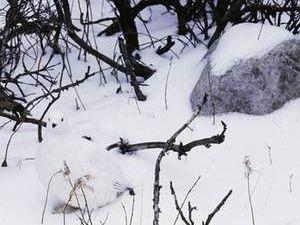 Kamuflaj ustası hayvanlar