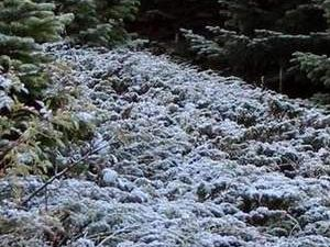 Uludağ ve Kartalkaya'ya kar yağdı