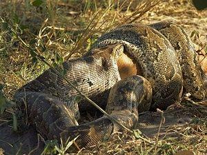 Vahşi doğadan inanılmaz kareler