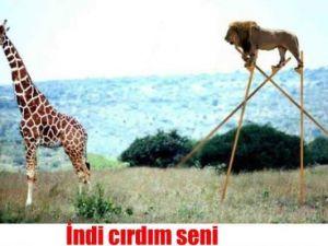Azerilerin en komik capsleri