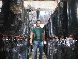 İşçiliği bıraktı mantar üretiyor