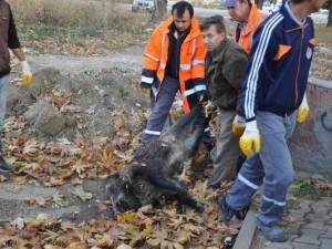 Anıt yakınına domuz bırakıldı