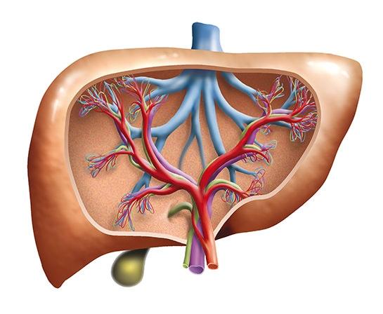 Karaciğerinizdeki o sorunu ortadan kaldırıyor 1