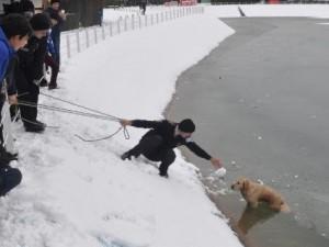 Buz Tutan Gölete Düşen Köpeği Böyle Kurtardılar