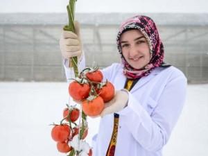 Eksi 40 derecede domates üretiyorlar