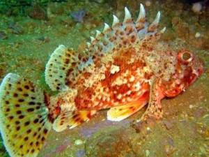 Denizlerin en tehlikeli canlıları