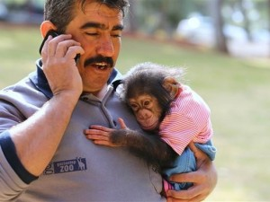 Şempanze Can ilgi odağı oldu