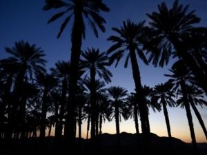 İsrail'in çöldeki mucizesi