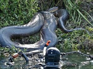 Dev yılanlar