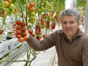 Bu domatesler bildiğiniz gibi değil