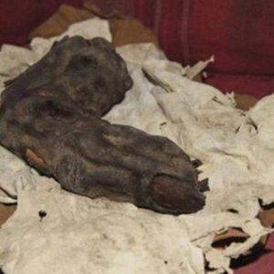 38 cm uzunluğundaki bu parmak iskeleti ''neye'' ait ?
