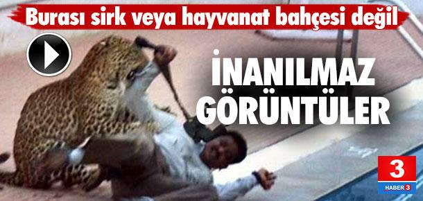 Okula leopar saldırısı: 6 yaralı