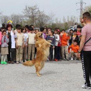 Jandarmanın Eğitimli Köpeklerinden Öğrencilere Gösteri
