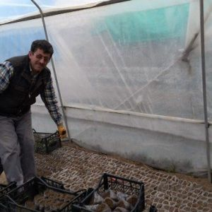 Adilcevaz'da Serada Fide Yetiştirme Dönemi Başladı