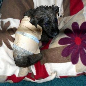 Ziftten Kurtarılan Köpeğe 'Zift' Adı Verildi