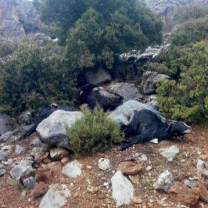Sürüye Yıldırım Düştü: 35 Keçi Telef Oldu