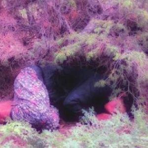 Kayıp kadın ormanda baygın halde bulundu