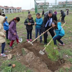 4000 Adet Çam İle Çınar Fidanları Toprakla Buluştu