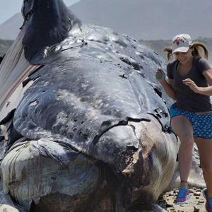 Dev balinanın cesedi kıyıya vurdu !