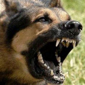 5 Yaşındaki çocuğu köpek öldürdü