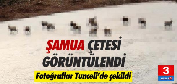 Şamualar Tunceli'de Fotoğraflandı