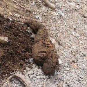 Şırnak'ta PKK'lıların cesetleri bulundu