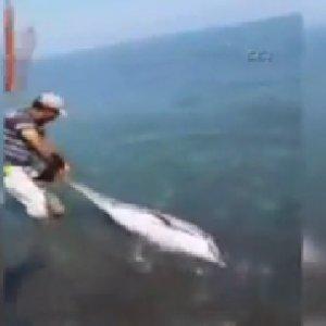 Yunus balığıbı böyle kurtardılar !