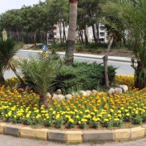 Çiçek açan Manavgat