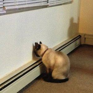 Evcil hayvanınız başını duvara yaslıyorsa dikkat !
