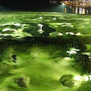Dünyada bir ilk olan golf sahası Samsun'da açılıyor !