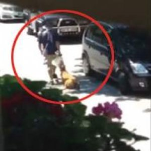 Levent'te sokak ortasında köpeğe işkence
