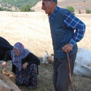 Telef olan ineklerine sarılıp ağladılar