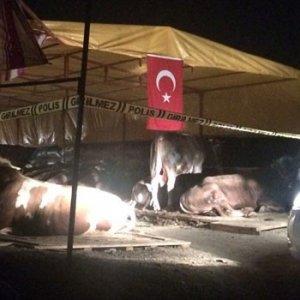 Kurbanlık pazarında silahlı kavga: 3 ölü
