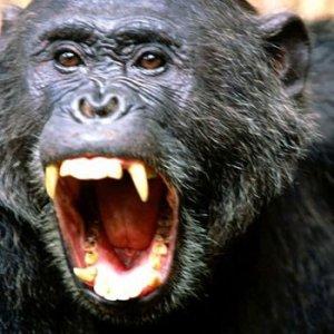 İstanbul'da maymun saldırısı