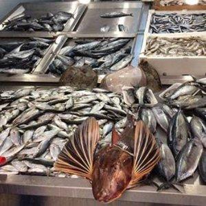 İstanbulluya müjde ! Bu sezon balık bolluğu var