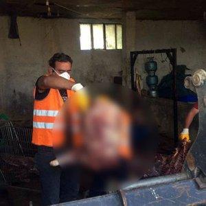 Domuz eti satıcısının ihbar ettiği sucuk temiz çıktı