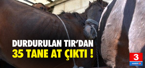 Durdurulan TIR'dan 35 tane at çıktı