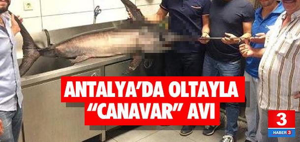 Oltayla 55 kiloluk kılıç balığı yakaladı