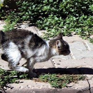 Bu kedi itfaiyeyi pes ettirdi