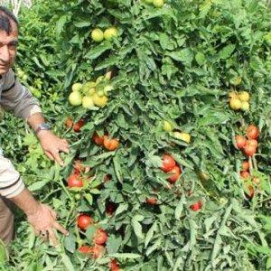 Devrim gibi düzenleme: Ekilmeyen tarlayı devlet kiralayacak