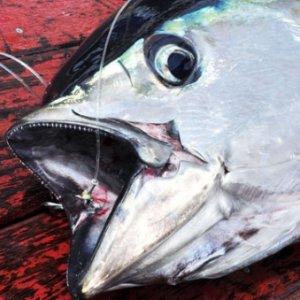 Yakaladığı balığın içinden cinsel organ çıktı !