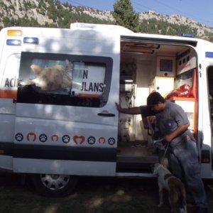 Ölüme terk edilen köpeklere Büyükşehir sahip çıktı