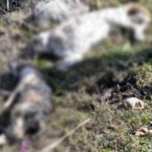 Vicdansızlık; 3 kedi bıçaklandı, boğuldu ve yakıldı!