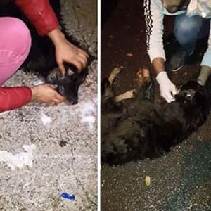 Sapanca'da köpek katliamı !
