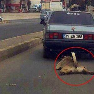 Köpeğe işkence yapan sürücü bulundu