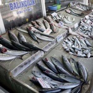 Balık fiyatlarına %300 zam