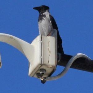 Türkiye'de yeni bir kuş türü keşfedildi!
